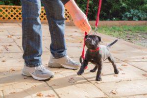 Puppy Training for the Phoenix AZ area