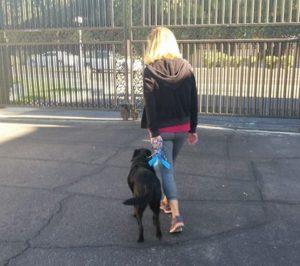 Dog Walking Tips for Tempe AZ