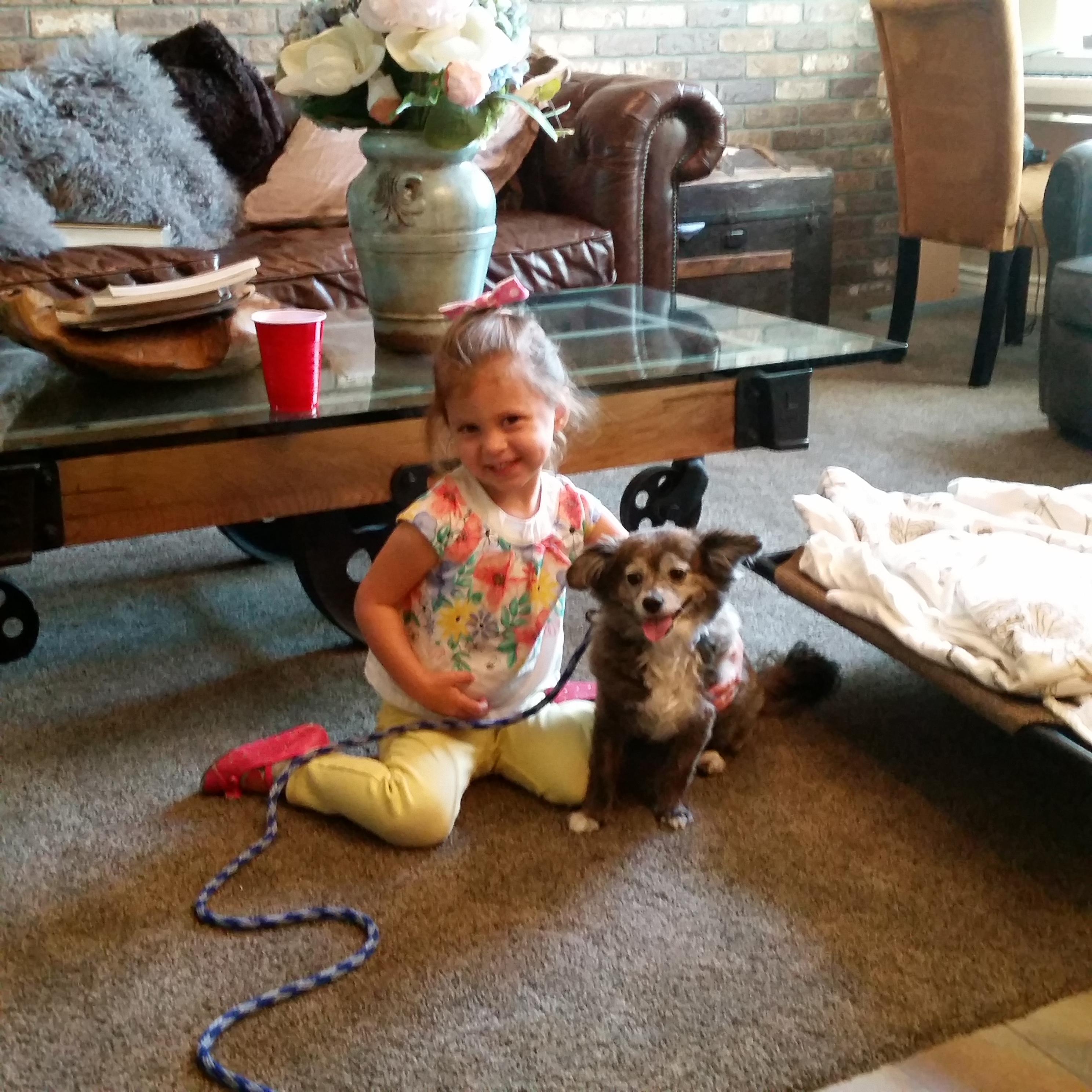 cocoa-Puppy Training Phoenix